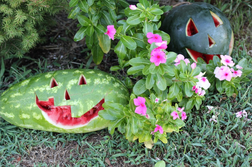 watermelons as pumpkins